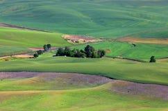 Palouse Landschaft Stockfotografie