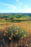 Palouse mit gelben Wildflowers Stockbilder