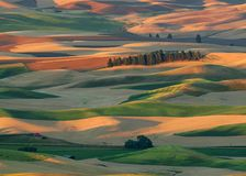 Palouse region. Rolling hills of the Palouse region from the summit of Steptoe Butte in Steptoe Butte State Park near Colfax, Washington royalty free stock photos