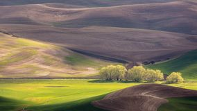 Palouse Region with Row of Trees in Sunlight. Spring in the Palouse Region of Washington State with Row of Trees in Sunlight Royalty Free Stock Image