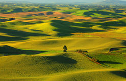 Palouse rolling hills Stock Images