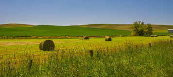 Palouse in Spring Royalty Free Stock Photography