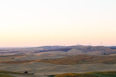 Palouse, WA. Wheat fields in Palouse, Washington Royalty Free Stock Photography