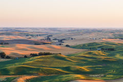 Palouse, WA. Wheat fields in Palouse, Washington Stock Images