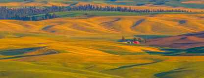 Palouse Wheat Farm Stock Image
