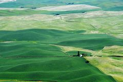 Palouse wheat fields Royalty Free Stock Photography