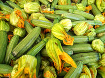 palowi zucchinis Zdjęcia Royalty Free