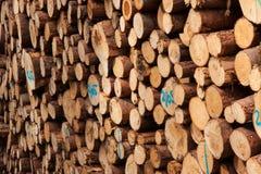 palowy drewno Obraz Royalty Free