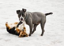 Pals del cucciolo fotografie stock