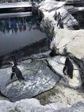 Pals del pingüino imagen de archivo