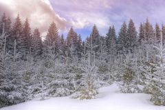Paltinis, Transylvania, Romania. Păltiniş is a mountain resort in Transylvania, Romania, 35 km south-west from Sibiu in the Cindrel Mountains Stock Image