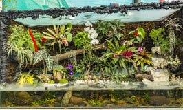 Paludarium akwarium, rośliny -/ryba fotografia royalty free