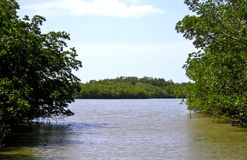 Palude 1 della mangrovia - terreni paludosi Fotografia Stock