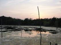 Palude al tramonto Fotografia Stock