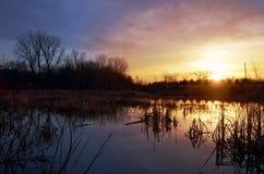 Palude al tramonto Fotografie Stock
