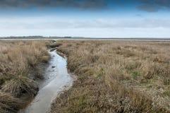 Palude d'acqua salata della costa Est Fotografia Stock Libera da Diritti