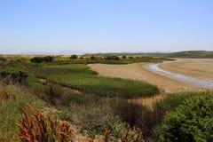 Palude d'acqua salata di Napa Valley Fotografie Stock Libere da Diritti