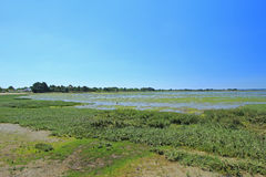 Palude d'acqua salata nel golfo di Morbihan, Francia Fotografie Stock