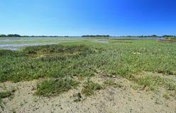 Palude d'acqua salata nel golfo di Morbihan, Francia Immagine Stock