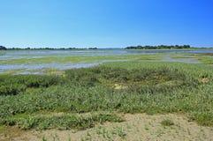 Palude d'acqua salata nel golfo di Morbihan, Francia Fotografia Stock