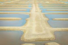 Palude d'acqua salata tradizionale di Noirmoutier durante il raccolto del sale Fotografia Stock Libera da Diritti