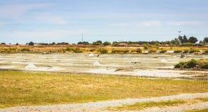 Palude d'acqua salata tradizionale di Noirmoutier durante il raccolto del sale Immagini Stock