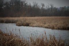 Palude del lago Immagini Stock Libere da Diritti