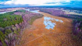 palude del lago Immagine Stock Libera da Diritti