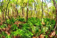 Palude della Florida Fotografia Stock Libera da Diritti