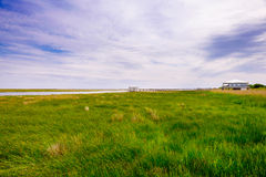 Palude della Luisiana fotografie stock libere da diritti