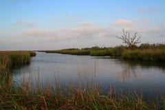 Palude della Luisiana fotografia stock