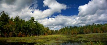 Palude della Nuova Inghilterra & stagno del giglio fotografia stock libera da diritti