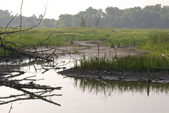 Palude della regione selvaggia circondata dagli alberi fotografie stock