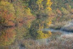 palude di autunno fotografia stock libera da diritti