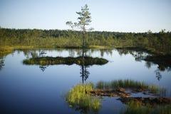 Palude di estate in Estonia fotografia stock