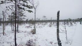 Palude di inverno Fotografie Stock