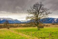 Palude di Murnauer Moos in Baviera fotografia stock
