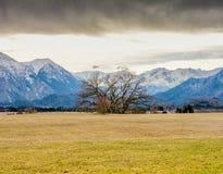 Palude di Murnauer Moos in Baviera immagini stock
