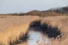 Palude di Titchwell, Norfolk, Inghilterra fotografie stock libere da diritti