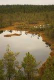 Palude di Viru nel parco nazionale di Lahemaa in Estonia immagini stock
