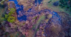 Palude e foresta Immagini Stock Libere da Diritti