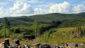 Palude e foresta di estate Fotografie Stock