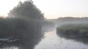 Palude espansiva con nebbia bianca archivi video