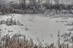 Palude ghiacciata con le canne Fotografia Stock