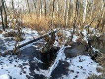Palude, ghiaccio e tracce di animali Immagini Stock Libere da Diritti