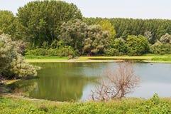 Palude naturale circondata dagli alberi Fotografia Stock