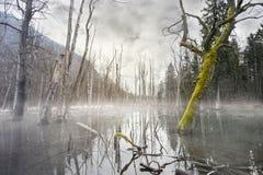 Palude nebbiosa mistica con gli alberi morti Immagini Stock Libere da Diritti