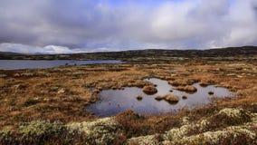 Palude nel parco nazionale di Forollhogna, Norvegia Immagine Stock Libera da Diritti