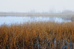 Palude nell'inverno Fotografie Stock