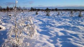 Palude nell'inverno, Lituania di Aukstumalos Immagini Stock Libere da Diritti
